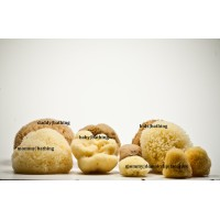 Natural Sea Sponge Family Pack| 10pcs| Honeycomb| Silk| Kalymnos Island Greece| Premium Quality
